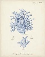 Antique Coral in Navy VI Fine Art Print