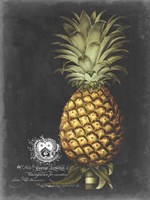 Royal Brookshaw Pineapple I Fine Art Print