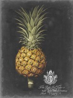 Royal Brookshaw Pineapple II Fine Art Print