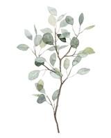 Seaglass Eucalyptus I Fine Art Print