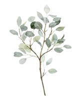 Seaglass Eucalyptus II Fine Art Print