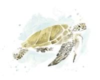 Watercolor Sea Turtle Study I Fine Art Print