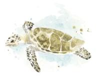 Watercolor Sea Turtle Study II Fine Art Print