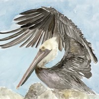 Soft Brown Pelican II Fine Art Print