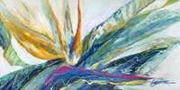 Flores Colores Fine Art Print
