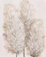 Pampas Grass IV Framed Print