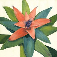 Tropical III Fine Art Print