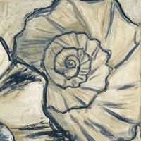 Navy Seashell Spiral II Fine Art Print