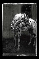 Equine Double Take II Fine Art Print