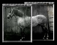 Equine Double Take IV Fine Art Print