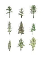 Collected Pines I Fine Art Print