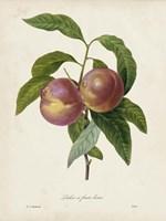 Redoute's Fruit II Fine Art Print