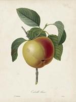 Redoute's Fruit IV Fine Art Print