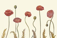 Coral Poppy Display I Fine Art Print