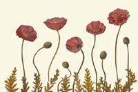 Coral Poppy Display II Fine Art Print