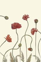 Coral Poppy Display III Fine Art Print