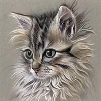 Kitten Portrait I Fine Art Print