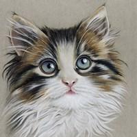 Kitten Portrait II Fine Art Print