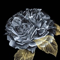 River Roses I Fine Art Print