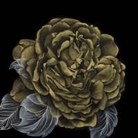 River Roses II Fine Art Print