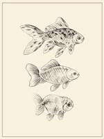 Goldfish I Fine Art Print