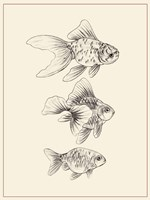 Goldfish III Fine Art Print