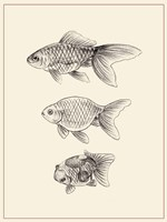 Goldfish IV Fine Art Print