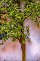Tree And Wall Fine Art Print
