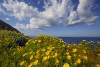 Europe, Greece, Santorini Wildflowers And Ocean Landscape Fine Art Print
