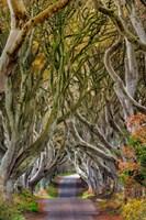 The Dark Hedges In County Antrim, Northern Ireland Fine Art Print