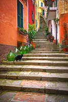 Europe, Italy, Monterosso Cat On Long Stairway Fine Art Print