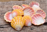 Hawaiian Sunrise Shells Fine Art Print
