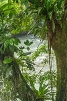 Costa Rica, Sarapiqui River Valley, Rio Puerto Viejo River In Rainforest Fine Art Print