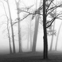 Ethereal Trees Fine Art Print