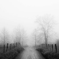 Sparks Lane in Fog Fine Art Print