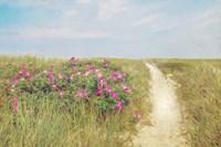 Beach Roses Fine Art Print