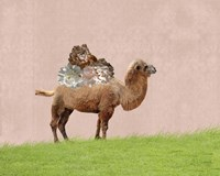Camel on Pink Fine Art Print