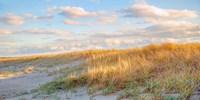 Grassy Dunes Panorama Fine Art Print
