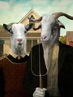 American Goat Fine Art Print