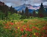 Colorado, Laplata Mountains, Wildflowers In Mountain Meadow Fine Art Print