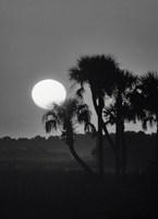 Palm Trees And Sunrise, Florida Fine Art Print
