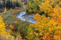 Autumn Color Along Divide Creek In Glacier National Park, Montana Fine Art Print