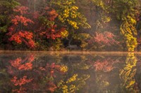 New Jersey, Belleplain State Fores,t Autumn Tree Reflections On Lake Fine Art Print
