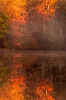 New Jersey, Belleplain State Forest, Autumn Tree Reflections On Lake Fine Art Print