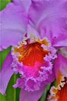 Orchids In Longwood Gardens Conservatory, Pennsylvania Fine Art Print