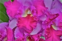Orchids In Longwood Gardens Pennsylvania Fine Art Print