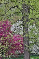 Flowering Crabapple Trees, Chanticleer Garden, Pennsylvania Fine Art Print