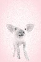 Pink Pig II Fine Art Print