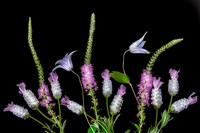 Botanical X Fine Art Print