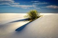 Dune Fine Art Print